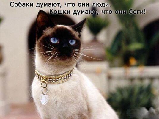 Фото мужчины dfhnj, Краснодар, Россия, 26